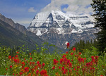 Mt Robson and paintbrush