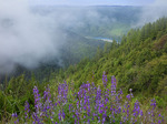 Klamath River and lupines near the Pacific Ocean