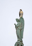 Red-tailed Hawk fledgling perched on an angel at the Cathedral of St. John the Divine. NYC.
