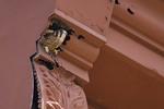 American Kestrel nestling female at nest on Front Street in early June.