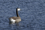 Hybrid Goose in early January.