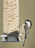 Black-capped Chickadee at peanut feeder in late February.