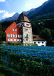 Prince of Liechtenstein's vinyard and winery