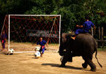 Bangkok's Samphran Elephant Ground & Zoo, elephant soccer exhibition
