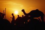 Pushkar Camel Fair campsite at sunset