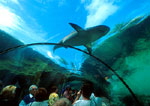 Atlantis aquarium with tourists viewing shark