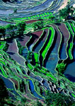 Yunnan's Yuanyang area rice terraces