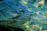 Yuanyang area rice terraces in spring