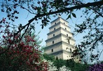 Xian's Dayan (Big Wild Goose) Pagoda surrounded by spring blossums