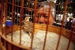Shanghai bird market in park