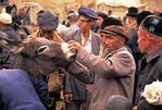 Kashgar Sunday bazaar livestock traders examining donkey