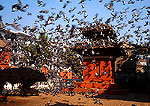 Kathmandu's Durbar Square altar with birds and bull