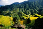 Guizhou rice terraces with ripened rice in autumn, mountainous eastern part of province