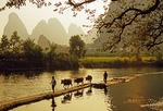 Gaotian farmers leading cows back to village across dam on Jade Dragon River near Yangshuo (Guilin area)
