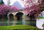 Stone bridge near Guilin on Jade Dragon River with spring blossums
