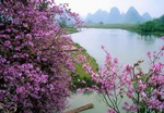 Jade River near Guilin in spring time  with trees in blossum