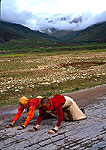 Tibetan nuns prostrating on road during pilgrimage to Lhasa from Amdo
