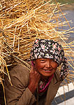Young Tibetan woman carrying straw on farm in Lhasa Valley