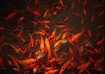 Shanghai's Yu Yuan (Yu Garden) goldfish pond