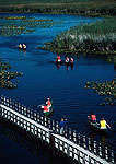 Point Pelee Provincial Park canoeists along boardwalk in marsh along Lake Erie