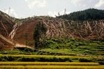 Hillside clear cut of trees in logging operation in Guizhou province