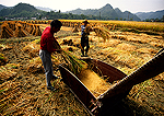 Autumn harvest rice threshing by hand by local farmers in southern Anhui province