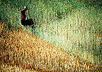 Farmer carrying buckets in field on bank of the Daning River, tributary of the Yangtze