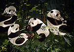 Chengdu embroidery workshop, detail of pandas design