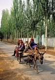 Uighur family in Kashgar riding donkey cart