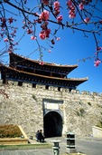 Dali city wall gate with spring blossums