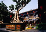 Pingyao traditional courtyard of house now used as hotel in the 2,700-year-old ancient walled city of Ming &amp; Qing architecture, featuring a bonzai tree  