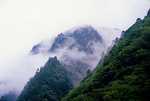 Sichuan's misty mountain habitat of the giant panda