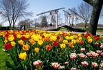 Holland, Michigan's Windmill Island during spring Tuliptime Festival