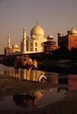 Taj Mahal with man and his camel along Yamuna River
