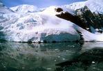 Paradise Bay glacier calving an iceberg