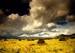 Groot Karoo storm clouds on the desert landscape near Graaff-Reinet