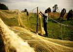 Curonian Spit fisherman mending nets