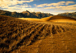 Tibet's Yarlung Zangbo Valley, straw planted to stop desert erosion