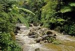 Puerto Rico's El Yunque rain forest (Caribbean National Park), El Mina River