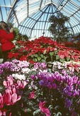 Detroit's Whitcomb Conservatory at Belle Isle Park, botanical gardens