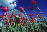 Detroit's Whitcomb Conservatory gardens at Belle Isle Park in springtime
