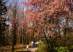 Grand Rapids's Frederik Meijer Gardens in springtime
