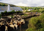 Sheep farm in the Groot Karoo near Nieu-Bethesda