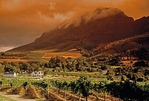 Banhoek vinyards in Cape Winelands with Simonsberg mountain above