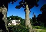Vergelegen Estate manor house and Chinese camphor trees near Somerset West in Cape Winelands