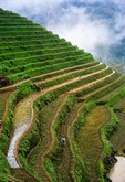Jingkeng Terraced Fields during late spring planting season at Longji