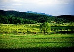 Jilin province fields and forest near Antu or Songjiang just north of Changbai Shan