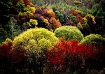 Autumn color in the Changbai Shan Nature Reserve in southern Jilin province