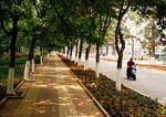 Shady Beidaihe street in the resort city on the Bohai Sea