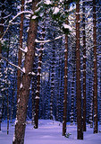 Hiawatha National Forest in winter in Upper Peninsula of Michigan